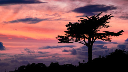 Fotobehang Aubergine Cypress tree silhouette on a colorful sunset sky, Santa Cruz, California