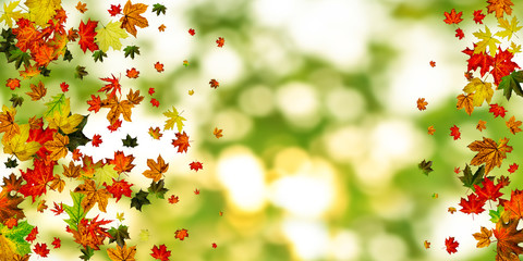 Foto auf Acrylglas Gelb Schwefelsäure Fall season. Autumn leaves falling pattern isolated on colorful. Thanksgiving concept
