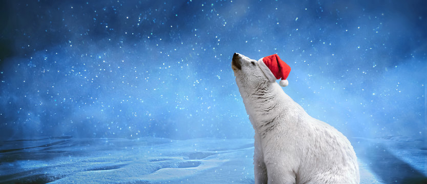 """Polar bear wearing Christmas hat, snowflakes and sky. Winter landscape with """"Happy New Year"""" inscription, panoramic image"""