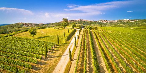 In de dag Pistache Istrian vineyard region aerial view. Town of Buje green landscape panorama