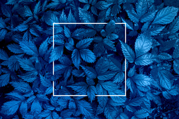 Plant background representing the color of the year 2020 classic blue. Toned photo, white frame and...