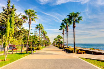 Foto op Canvas Palm boom Limassol, Cyprus