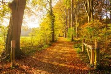 Foto op Aluminium Weg in bos Sun shining through the trees in a forest with fallen leaves on a path during Autumn.
