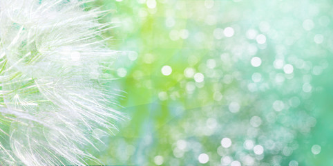 Photo sur Aluminium Vegetal Dandelion seeds flying away. Spring floral background