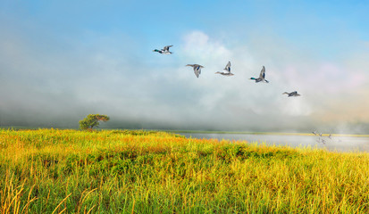 Poster Blauw Morning landscape with fog by the lake with wild ducks