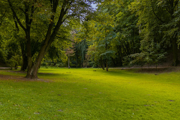 Fototapeta idyllic peaceful park outdoor nature scenic spring time environment green grass meadow smooth ground surface surrounded by trees foliage without people