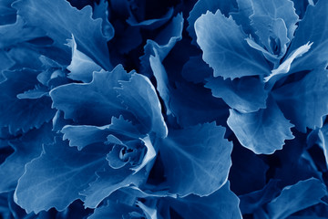 Beautiful leaves toned in trendy Classic Blue color of the Year 2020 make pattern background