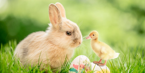 easter bunny and eggs