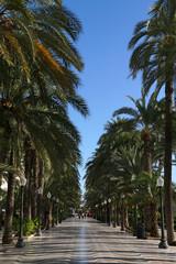 Palmenallee in Alicante
