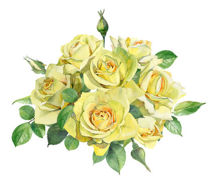 Bouquet of watercolor yellow roses on a white background