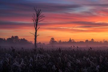 Türaufkleber Koralle Dawn over the meadow near Piaseczno, Masovia, Poland