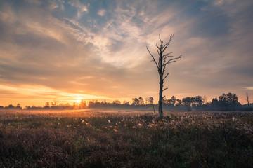 Fototapeten Dunkelbraun Sunrise over the meadow and lonely tree near Piaseczno, Masovia, Poland