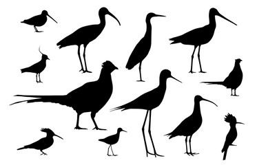 Shorebirds and birds of fields. Silhouettes vector set