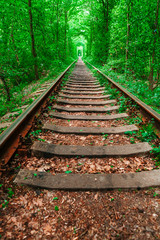 Photo sur Aluminium Vert a railway in the spring forest tunnel of love