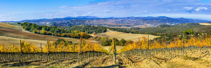 Wonderful scenic landscape of Tuscany. Vineyrds of Montalcino - famous wine region in Italy