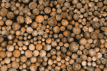 Poster Firewood texture Wood stack log pile texture of cut round trees tree slices