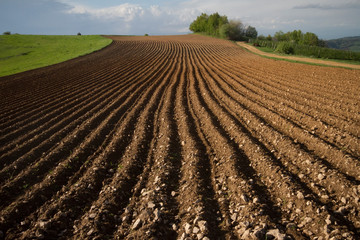 Photo sur Aluminium Marron chocolat cultivated land prepared for sowing, Teočin, Serbia