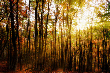 Rays of sunlight filtering through the branches of the forest
