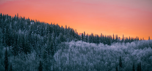 Poster Morning with fog Forest Winter Sunset - Colorful Evening Skyline