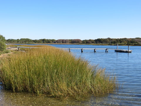 Tall Grass with a Dock in the Background on a pond in Southampton, Long Island, New York