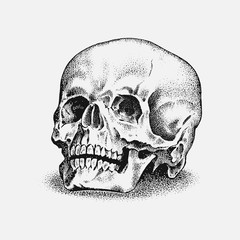 Human skull in vintage style. Retro old school sketch for tattoo. Monochrome Hand drawn engraved retro badge for t-shirt, banner poster and logo.
