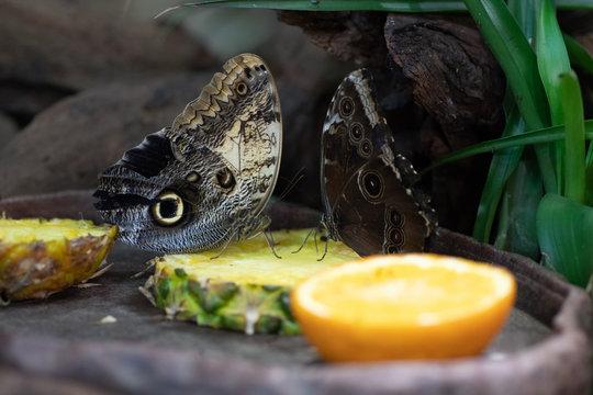 Animal of the world. Wroclaw zoo. Afrykarium