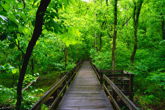 wooden bridge in forest