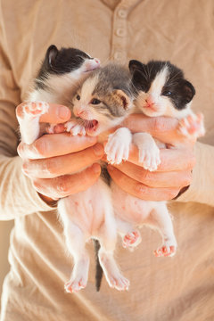 Very Little striped kittens in man hands.