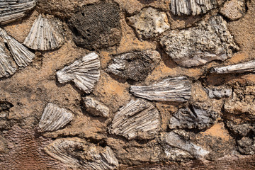 Fossil and coral built into the walls of Galle Fort in Sri Lanka