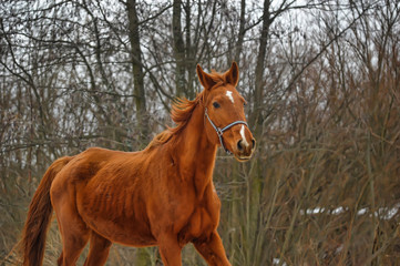 brown horse by the countryside in the beginning of winter