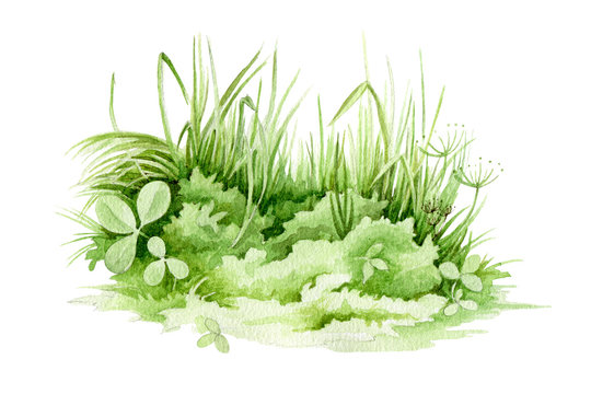 Easter green grass close up watercolor illustration. Lush spring grass - meadow element. Background with clover,  fresh herbs and natural plants.
