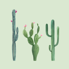 Beautiful three vector watercolor cactus hand drawn illustrations set. Transparent background. Isolated objects.