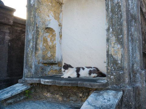 A cat who stands guard in the St. Louis Cemetery #1 in New Orleans, Louisiana, United States
