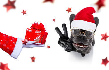 Fotobehang Crazy dog christmas santa claus dog