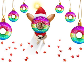 Foto op Plexiglas Crazy dog christmas santa claus dog and xmas balls or baubles hanging
