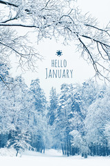 hello January. concept of winter season, month January. winter landscape with snow covered trees. beautiful snowy winter forest.