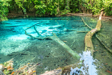 Emerald Pool clear blue water in tropical rainforest