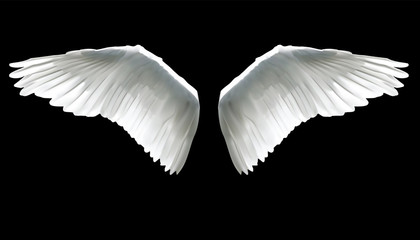 Realistic elegant white angel wings on black background.