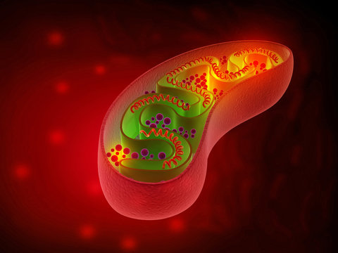 Cell mitochondria anatomy. 3d illustration.