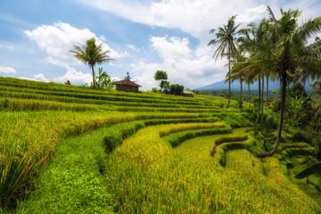 View of Jatiluwih rice terrace, Bali