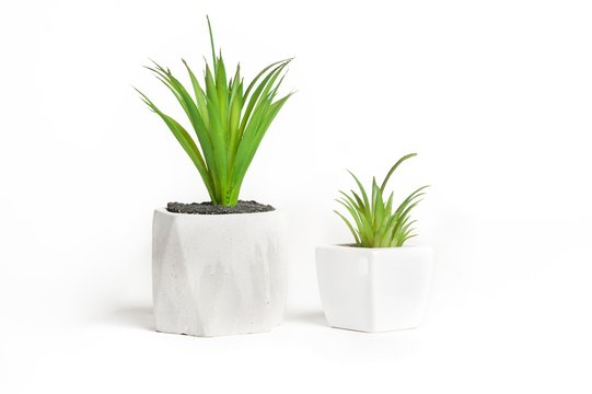 plant in pot isolated on white
