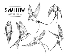 Set of a flying swallows. Hand drawn illustration converted to vector. Outline with transparent background