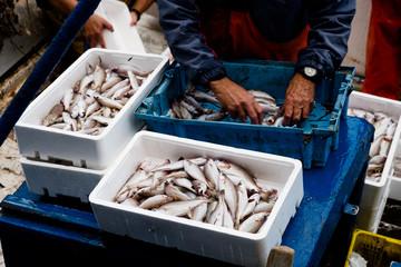 fisherman sorting the fish on board