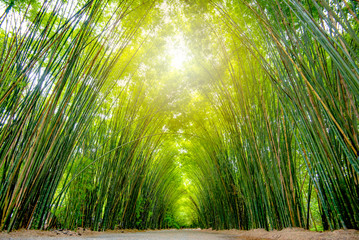 Poster Bamboo Asia Thailand, at the bamboo forest and tunnel vision, green bamboo forest background