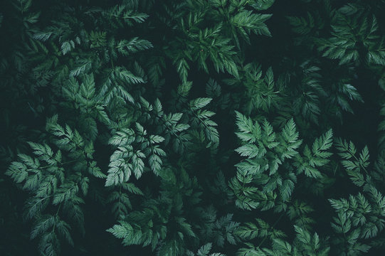 Green leaves background pattern