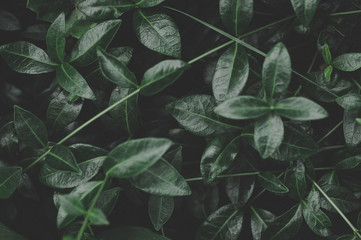 Dark green leaves pattern background