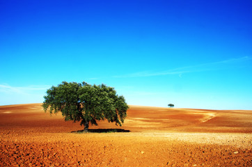 trees in plowed field, alentejo region, Portugal