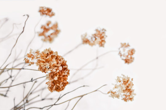 Dry hortensia (hydrangea) flowers and twigs over natural snowy background. Picturesque winter landscape in calm light shades. Shallow depth of field