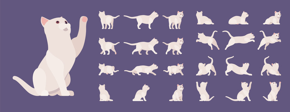 White pedigree cat set. Active healthy kitten with beautiful fur, light coat, cute pet, home playful companion. Vector flat style cartoon illustration isolated, white background, different views, pose