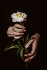 Hand holding a peony, on dark background